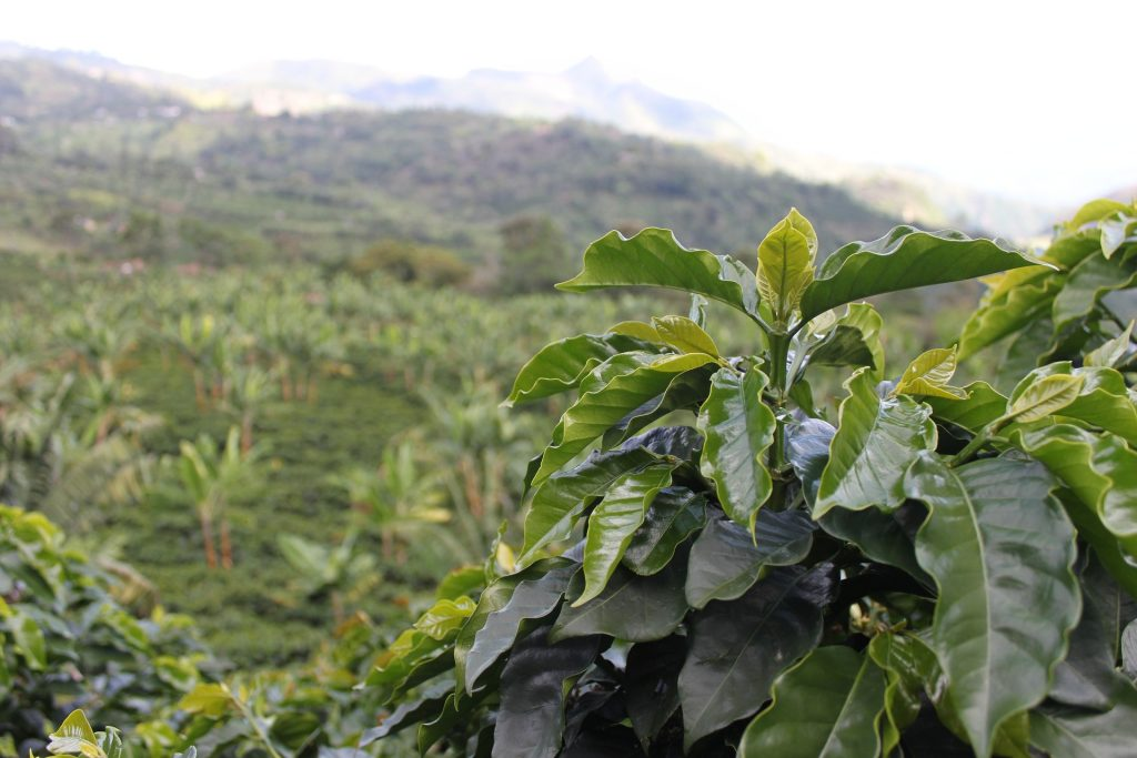 Micro Lots: Exceptional Coffees | Brûlerie des Monts